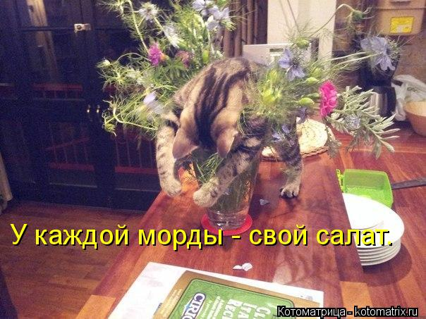 kotomatritsa_px (604x453, 65Kb)