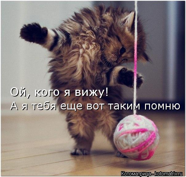 kotomatritsa_uG (604x574, 57Kb)