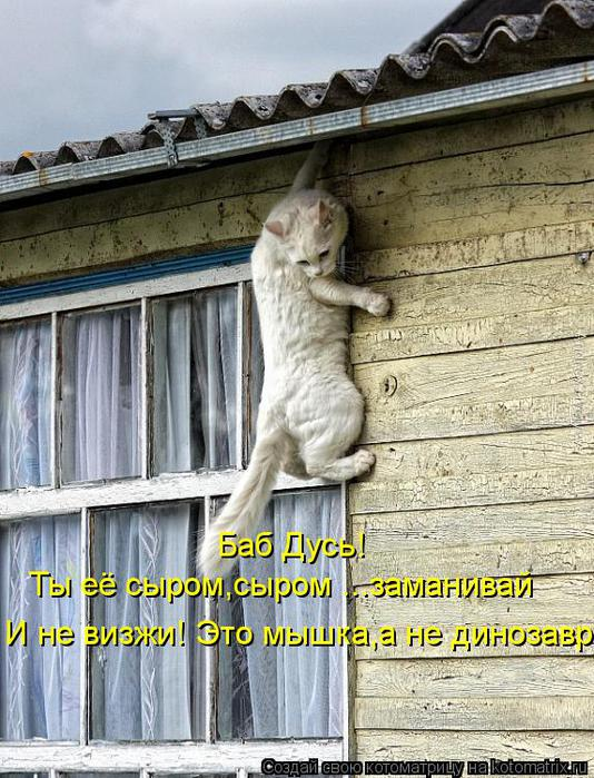 kotomatritsa_Xu (534x700, 92Kb)