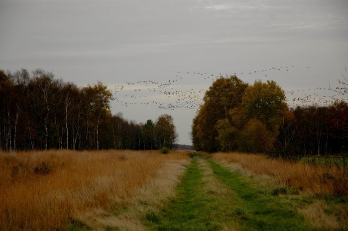 Германия, окрестности болота Реденер Мур, Rehdener Geestmoor. 89104