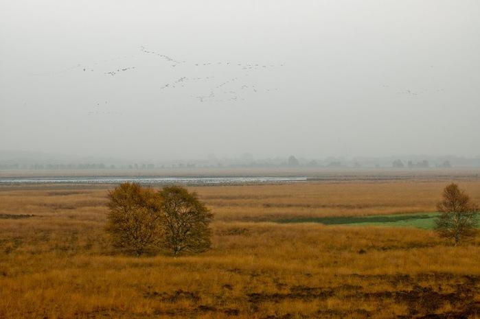 Германия, окрестности болота Реденер Мур, Rehdener Geestmoor. 82550