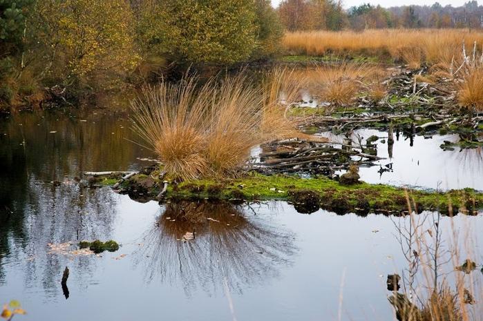Германия, окрестности болота Реденер Мур, Rehdener Geestmoor. 38395