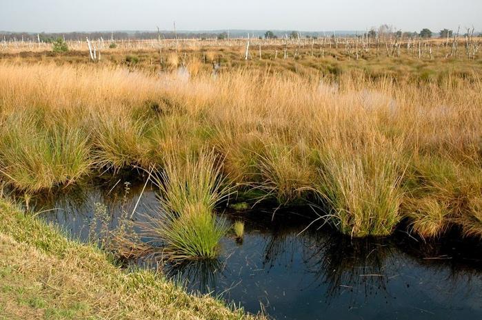 Германия, окрестности болота Реденер Мур, Rehdener Geestmoor. 21255