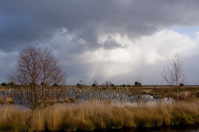 Германия, окрестности болота Реденер Мур, Rehdener Geestmoor. 17931