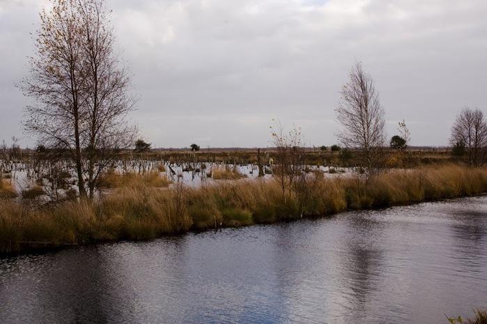 Германия, окрестности болота Реденер Мур, Rehdener Geestmoor. 79593
