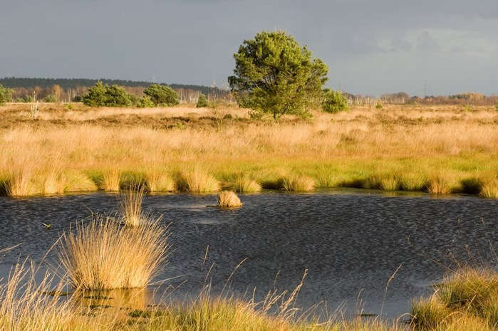 Германия, окрестности болота Реденер Мур, Rehdener Geestmoor. 31026