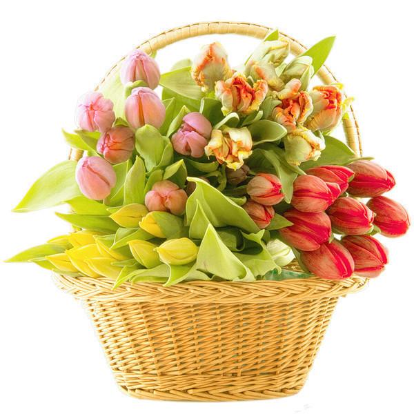 тюльпаны (600x600, 134Kb)