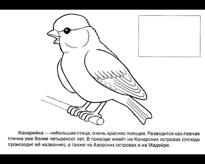 Картинки птичек для детей раскраски