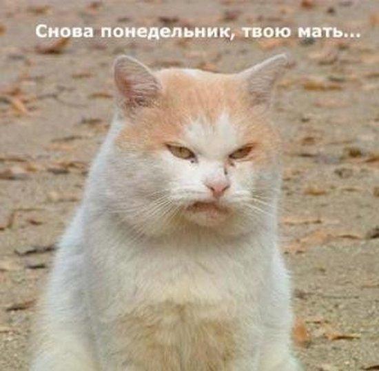 кот (550x538, 43Kb)