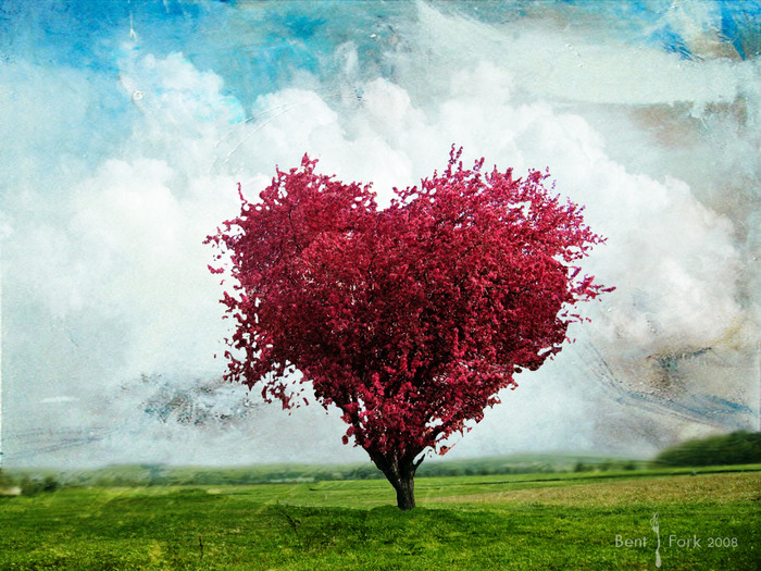 3880812_Love_tree_Wallpaper_ofdgi (700x525, 178Kb)