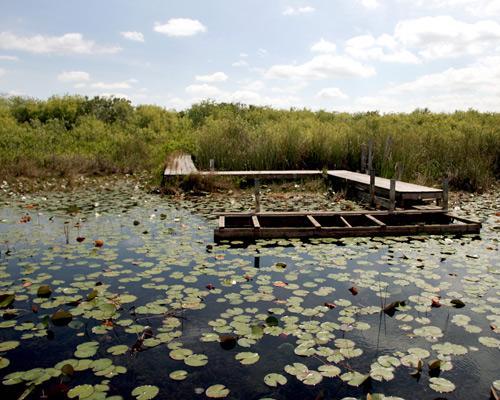 8_wetlands_1 (500x400, 44Kb)