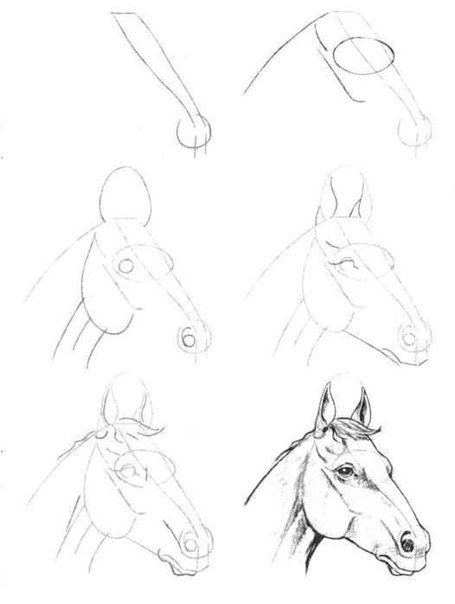 как нарисовать лошадь схема.
