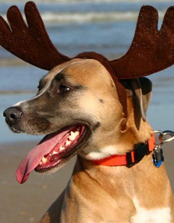 Рога для собаки на новый год