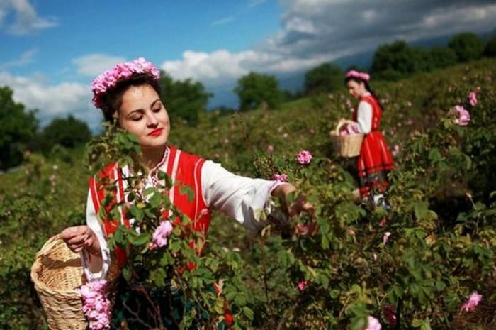 Долина Роз в Болгарии 1 (700x465, 89Kb)