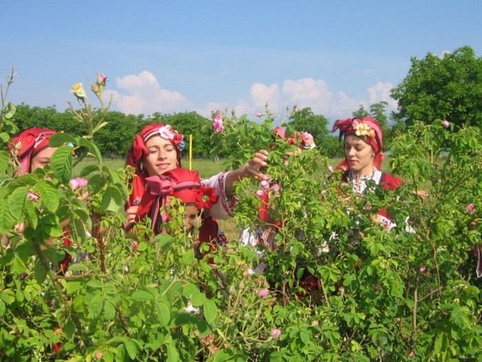 Долина Роз в Болгарии 3 (700x525, 133Kb)