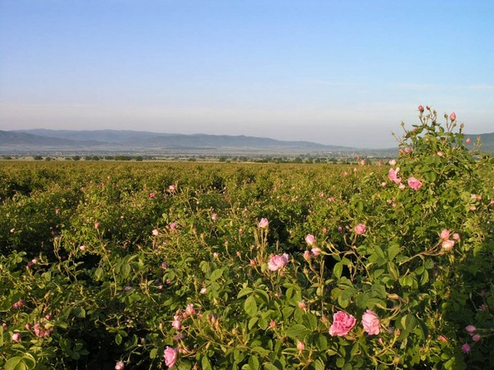 Долина Роз в Болгарии 9 (700x525, 124Kb)