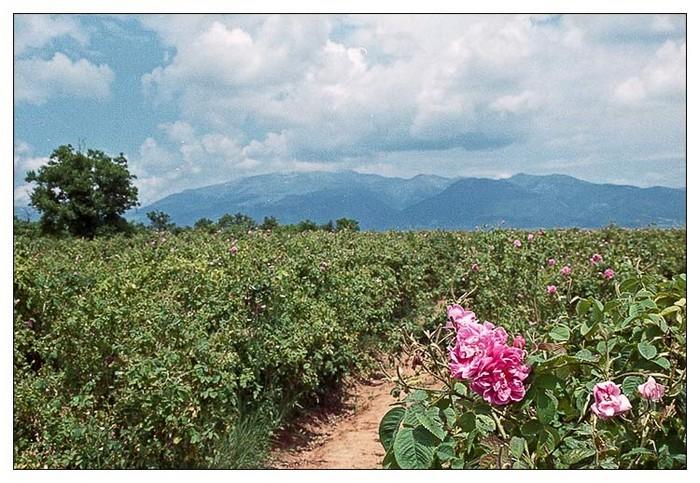 Долина Роз в Болгарии 15 (700x483, 132Kb)
