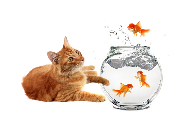 cat-goldfish03 (700x466, 117Kb)