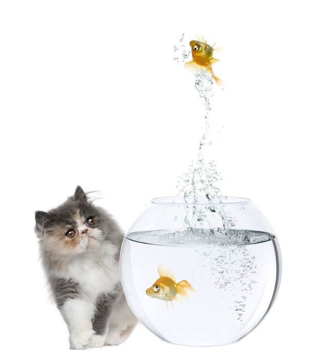 cat-goldfish05 (612x700, 97Kb)