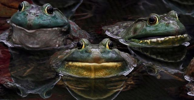 these_funny_animals_640_09 (640x331, 38Kb)