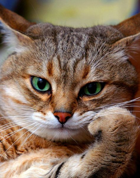 Забавные животные - Страница 5 89466261_large_these_funny_animals_640_13