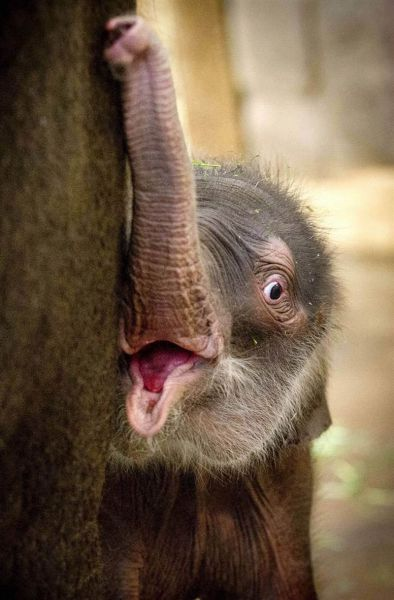 these_funny_animals_640_40 (394x600, 37Kb)