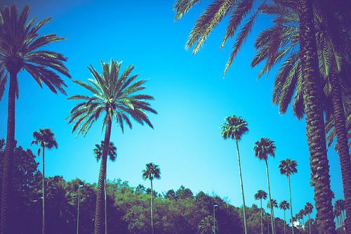 Аквамарин,винтажные фото,пальмы (500x333, 157Kb)