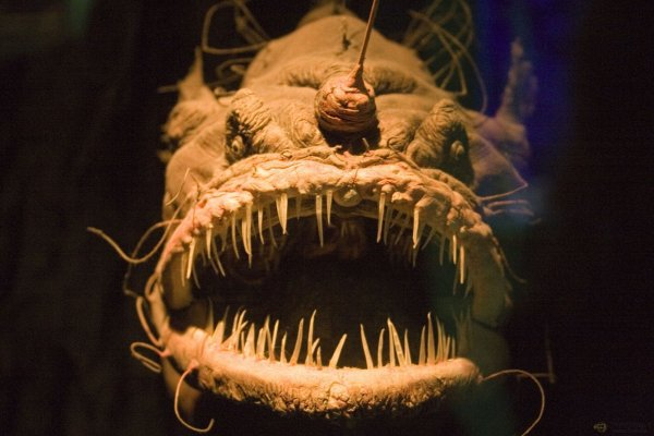морское чудовище (600x400, 42Kb)