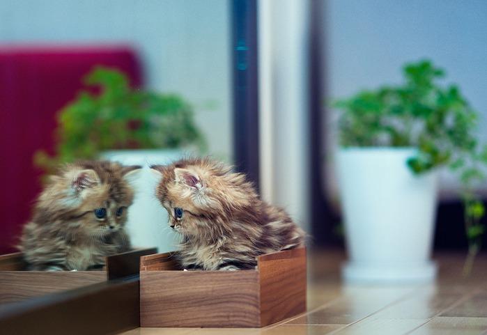 смешные котята фото (699x481, 68Kb)