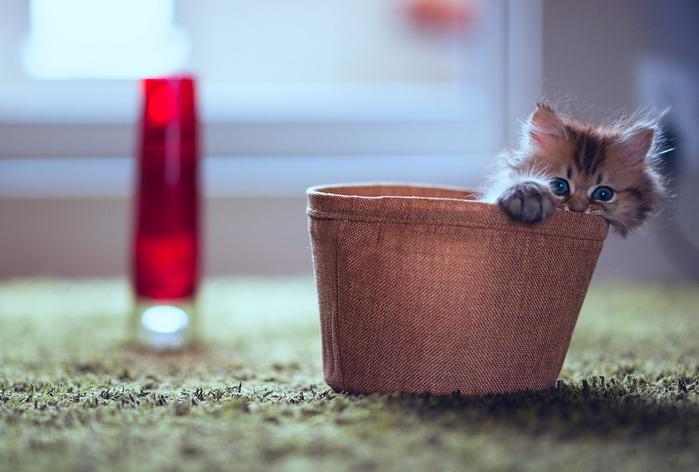 смешные котята фото 4 (699x472, 72Kb)