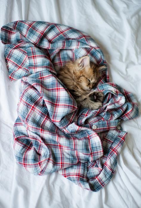 смешные котята фото 6 (473x699, 288Kb)