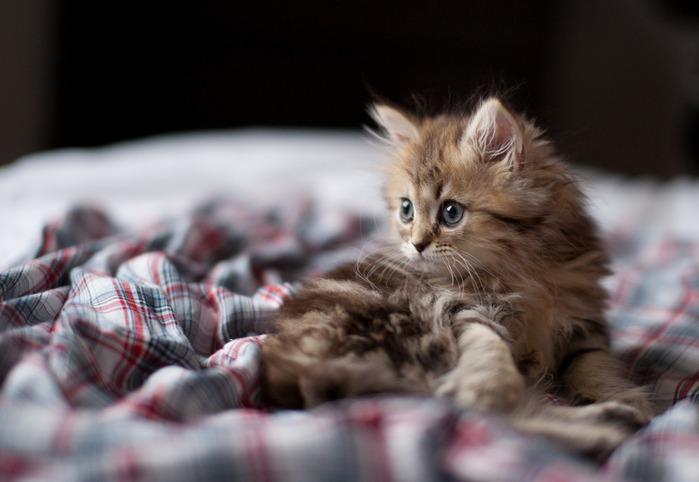 смешные котята фото 8 (699x482, 63Kb)