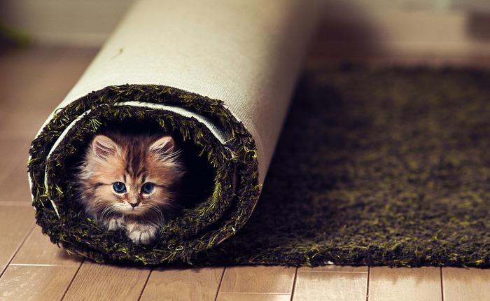 смешные котята фото 9 (700x430, 86Kb)