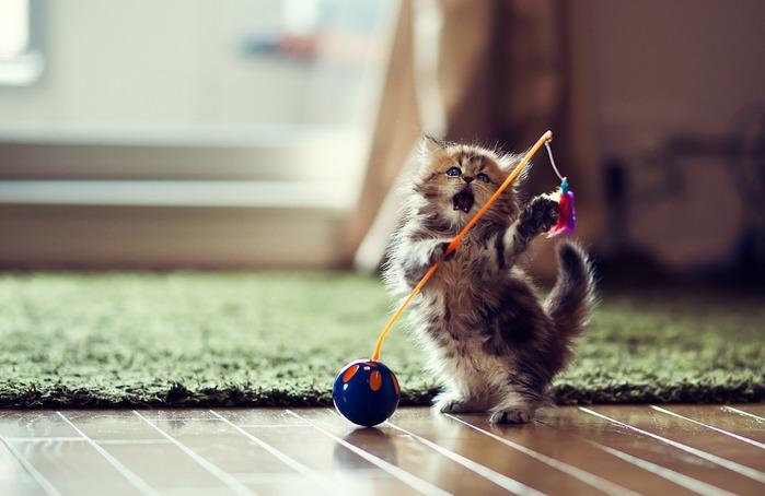 смешные котята фото 11 (699x454, 68Kb)