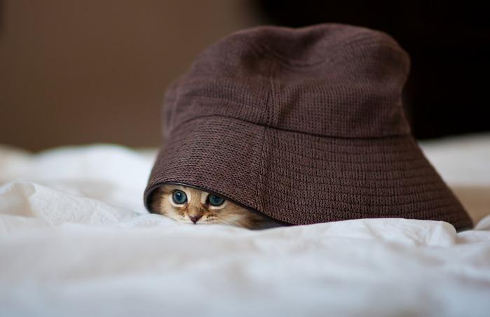 смешные котята фото 13 (699x453, 48Kb)