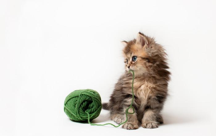 смешные котята фото 15 (700x442, 36Kb)