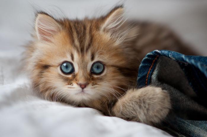 смешные котята фото 19 (699x465, 65Kb)