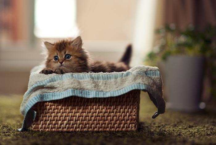 смешные котята фото 21 (700x472, 77Kb)