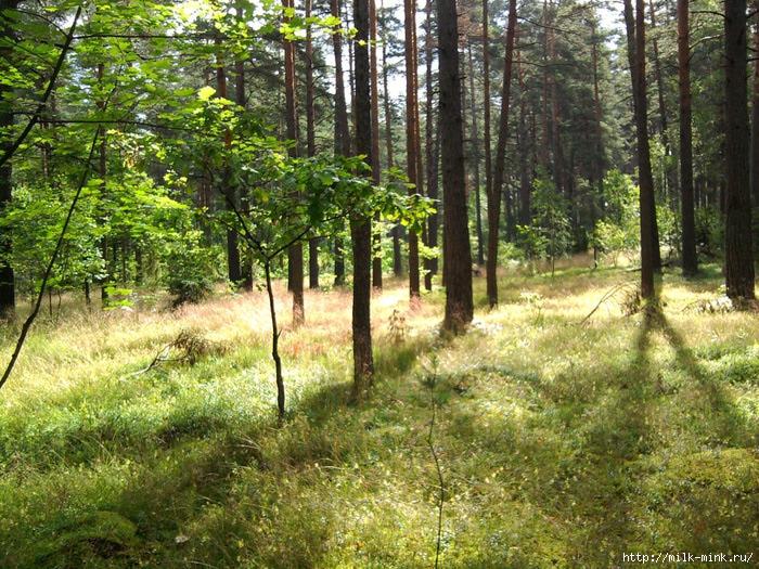лес (700x525, 394Kb)
