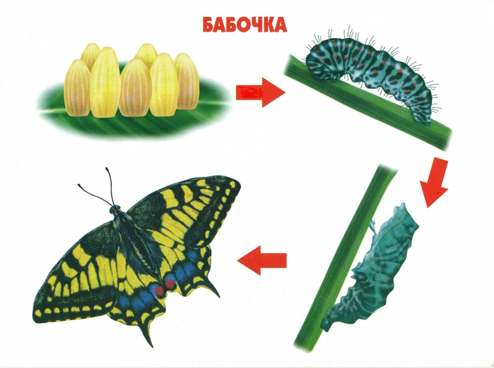 Этапы роста цветка в картинках