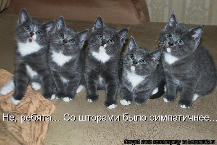 kotomatritsa_QF (700x467, 57Kb)
