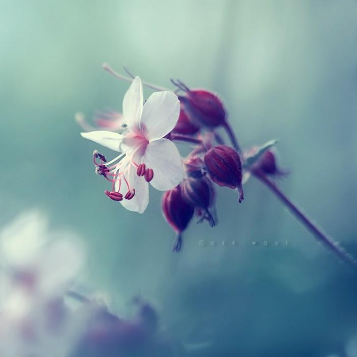 Нежные фото цветов от Oer-Wout 2 (700x700, 48Kb)