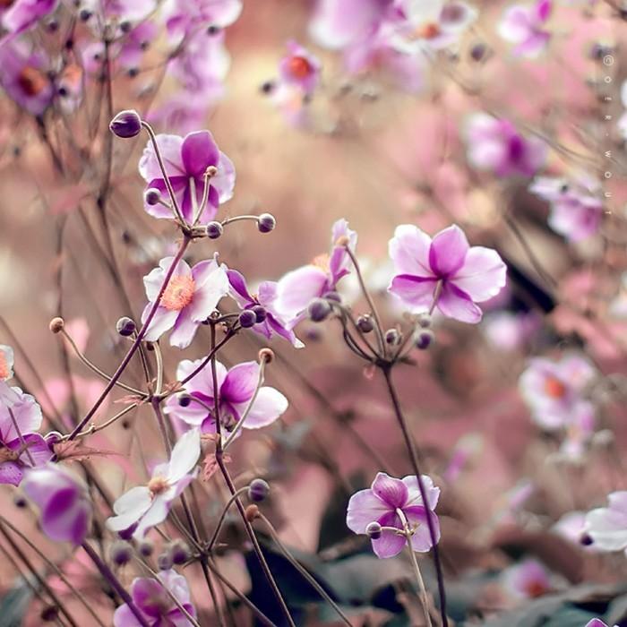 Нежные фото цветов от Oer-Wout 4 (700x700, 109Kb)
