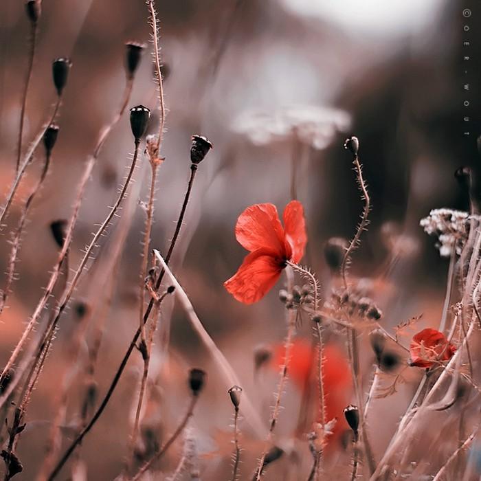 Нежные фото цветов от Oer-Wout 6 (700x700, 101Kb)