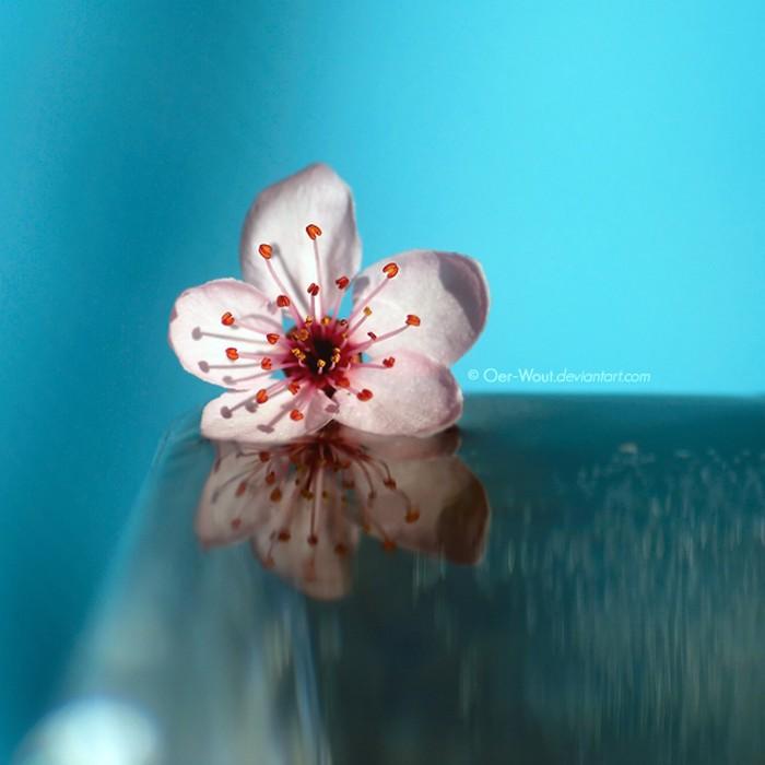 Нежные фото цветов от Oer-Wout 8 (700x700, 67Kb)