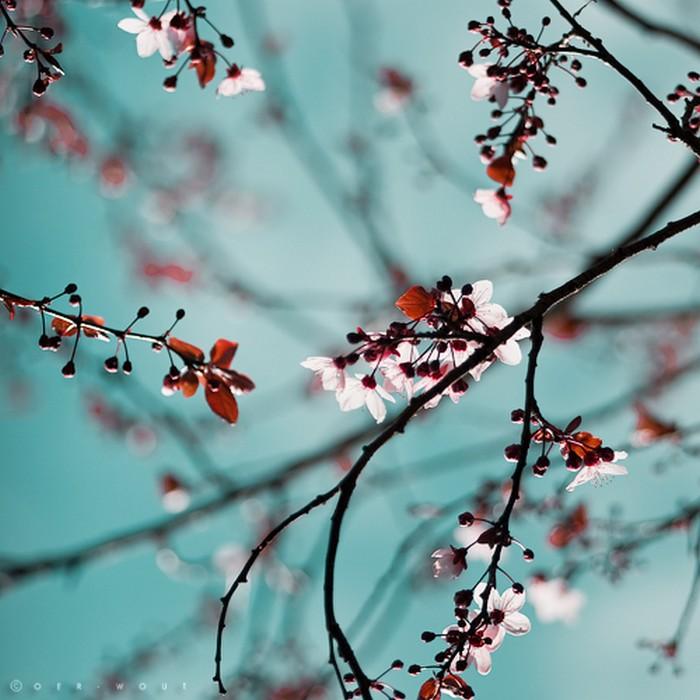 Нежные фото цветов от Oer-Wout 10 (700x700, 97Kb)