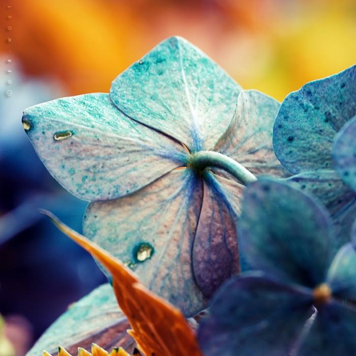 Нежные фото цветов от Oer-Wout 12 (700x700, 98Kb)