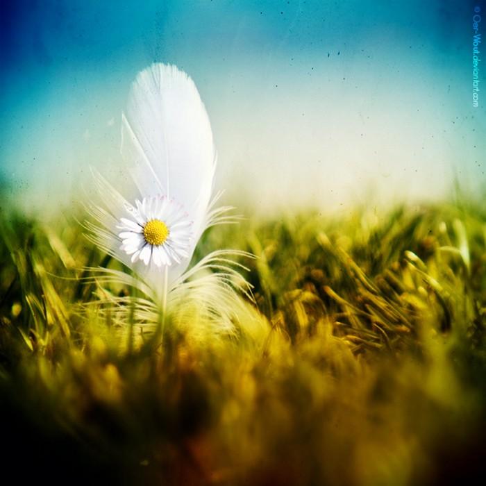 Нежные фото цветов от Oer-Wout 14 (700x700, 95Kb)