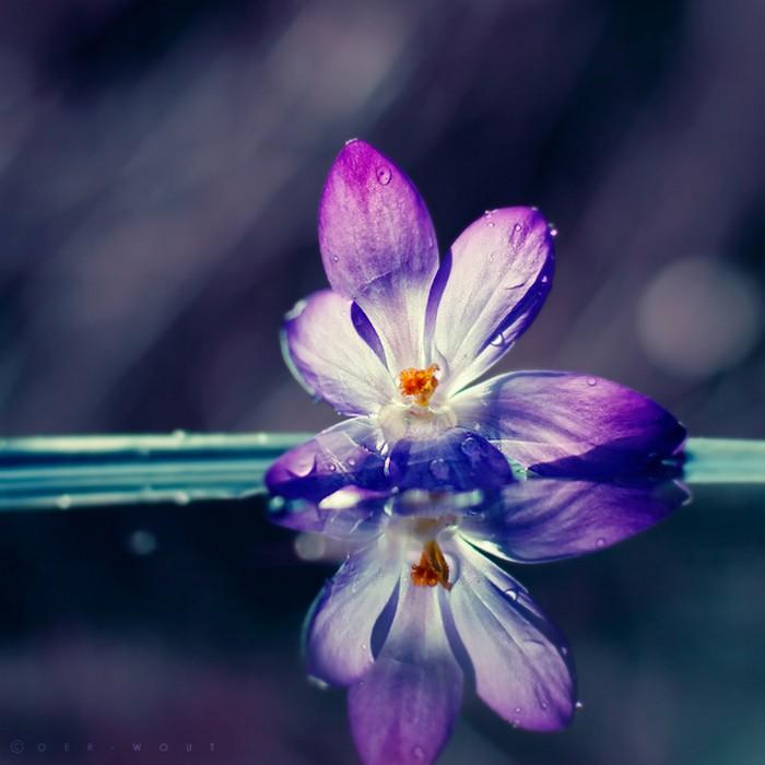 Нежные фото цветов от Oer-Wout 16 (700x700, 67Kb)