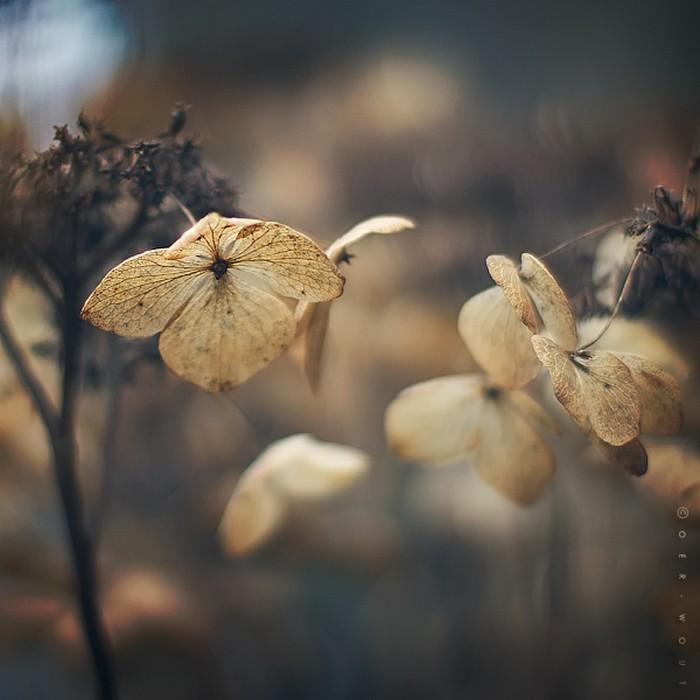 Нежные фото цветов от Oer-Wout 20 (700x700, 70Kb)